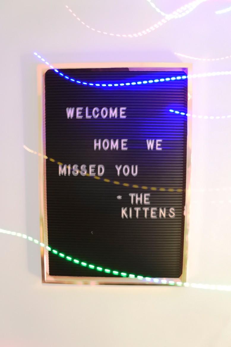 kitten board.jpg